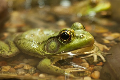 frog-2005601__340