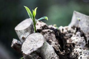 grow-781769__340